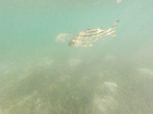 底地ビーチ 熱帯魚